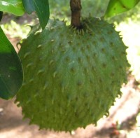 Soursop photo by Damien Boilley