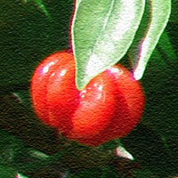 Surniam Cherry